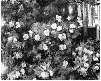 Valkoisia ruusuja Simeliuksen puutarhassa, Mikko Oinonen 1914